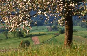 Foto Naturpark_baywald_klein